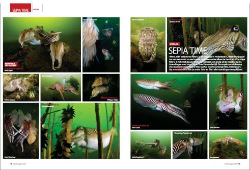 Picture's of a cuttlefish competition published in the Dutch Magazine Duiken